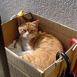 冬に備えて猫小屋を作る