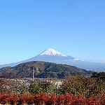 気儘日記:祝・富士山世界遺産登録でゴーヤが成長し四天王でチャーシュー麺を食し猫の寝場所を確認
