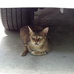 猫の日常:瞬時に姿を現し瞬時に姿を消す外猫のメリーが居た驚きの場所