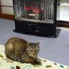 猫日記:外猫「アル」が部屋の中で小一時間暖をとり「みぃ」との距離感がなんともw