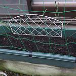 お庭にお花を咲かせましょう!綺麗な「チューリップ」の球根を植えてみたぞ