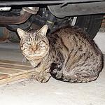 猫日記:東京へ行ってる間に新たな猫登場!色々な出来事が起こっていた1カ月でした