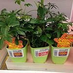 観葉植物が部屋やデスクにあると癒やし効果になる?前から気になってチェックはしてたが。。。