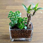 癒やしを求めて「観葉植物」をついに買ったぞ!パソコンから視線を外せばそこにある
