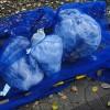 [日刊きまでん Vol.5]今日からまた一人暮らしで「ゴミ出し・水撒き・自炊」のタスクが増えたぞw