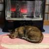 猫日記:外猫アルが家の中で暖を取るのもあと少し [日刊きまでん Vol.20]