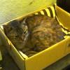 猫日記:ダイソーの座布団を気に入った外猫たちが場所を奪い合う!安上がりだなぁ〜 [日刊きまでん Vol.32]