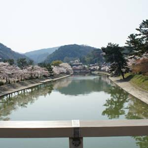 京都観光3-3:宇治橋から塔の島・橘島へと歩く桜並木の景色が素敵だ!鵜飼の鵜も見ることが出来るよ