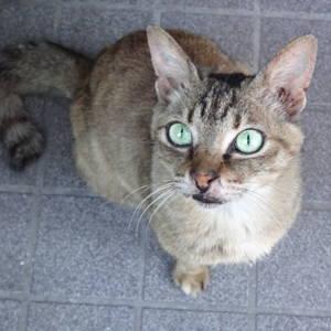 外猫メリーが姿を消して3週間もう会えないのかも