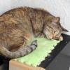 猫日記:暖かくなり寝床の上で寝るようになった外猫のアル [日刊きまでん Vol.65]