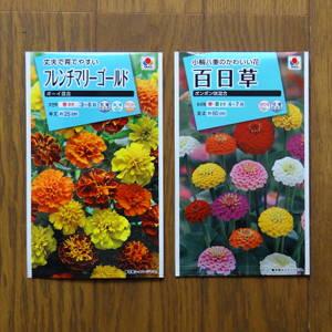 古い花の種では発芽せず!新しいのを買ってきたら。。。おやぁ?? [日刊きまでん Vol.90]