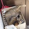 猫日記:アルとメリーが寝床を交換!足を投げ出して寝てるよ [日刊きまでん Vol.74]