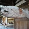 京都観光5-4:御朱印を頂きに再び「萬福寺」を訪れる!魚梆を叩くところを見られてラッキーだったぞ