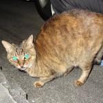 猫日記:外猫メリーは生きていた!行方不明から5ヶ月まるまる太って帰ってきたぞ