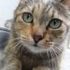 猫の死期が近づいていると感じさせる兆候とは? 〜外猫アルが亡くなるまでの7日間の記録〜