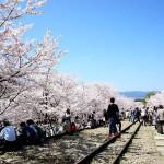 京都観光2015-6:満開の桜を堪能するために「蹴上インクライン」に行ってきた!琵琶湖疏水の勢いある水にも驚かされたぞ