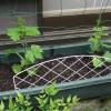 今年の緑のカーテンは「夕顔」をメインにする!ゴーヤも場所を変えて植えることにしたぞ