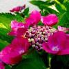 我家の庭に今年咲いた花たちを紹介しよう!夏に向かって新たに花を咲かす準備をしてるよ