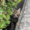 猫日記:クロがスリムになったのは子猫を3匹産んだからだった!新たな猫クロサビも寝に来るようになったぞ