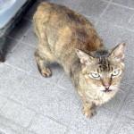 記事にしたら姿を消した外猫メリーが帰ってきた!