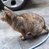 飼い主が死んだと思っていた外猫メリーが帰ってきた!また太ってる(笑)