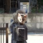 外猫メリーが大声でご飯を催促する今日この頃