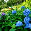 京都のあじさい寺で有名な「三室戸寺」へ御朱印と紫陽花を見に訪れる:京都観光2015-20
