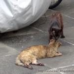 外猫メリーと喧嘩屋クロサビが友達に!まさかの展開に驚愕だ