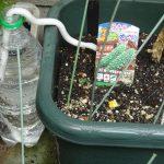 ゴーヤが植わってる土が乾かないように「水やり楽だぞう」を試してみた