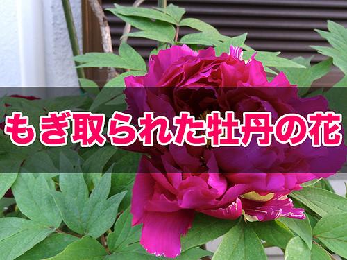 DSC04924_t