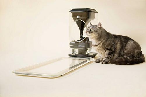 1_Cat Bait spear device