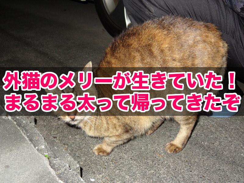 外猫メリーが5ヶ月ぶりに帰ってきた(title)