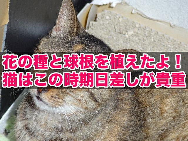 外猫アルの爆睡日向ぼっこ(2014/10)