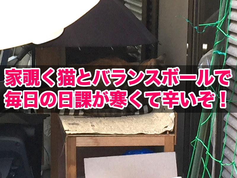家を覗く外猫アル(title)