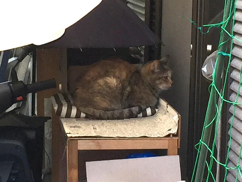 家を覗く外猫アル