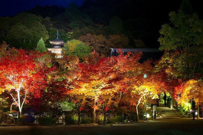 紅葉- 永観堂禅林寺 / Eikando Zenrin-ji Temple