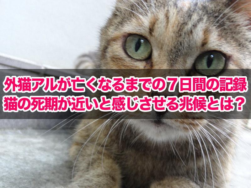 外猫アルが亡くなるまでの7日間の記録