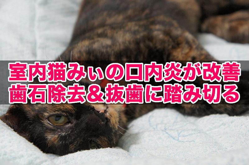 室内猫みぃの口内炎が改善