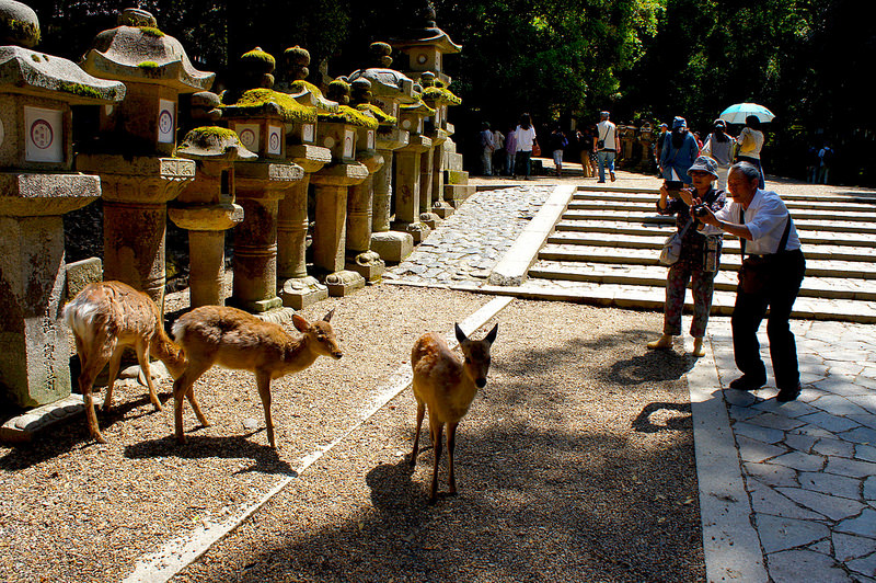 表参道に鹿/春日大社(Kasuga-Taisha Shrine / Nara City) 2015/05/21