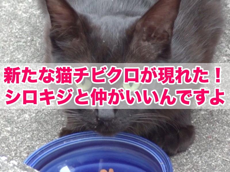 新たな猫チビクロが現れた!