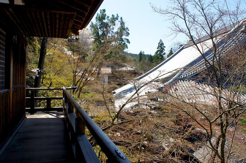 開山堂/永観堂 禅林寺(Eikando, Zenrin-ji Temple / Kyoto City) 2015/04/02