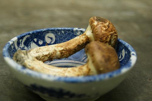 Photo:松茸(Tricholoma matsutake) By:kanonn