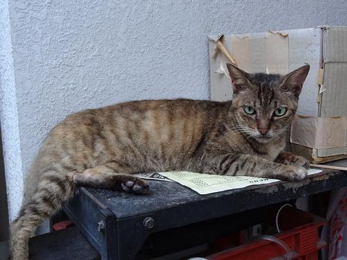 外猫mii(2012/08/04)