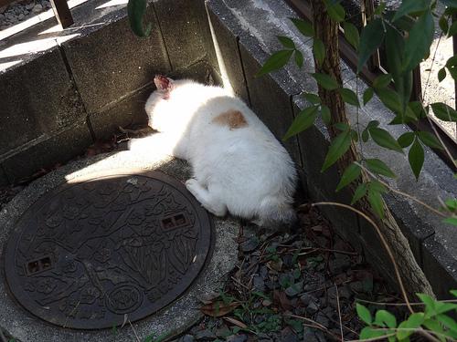 庭の片隅で寝るキティ