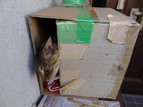 猫小屋 外猫を入れて試す