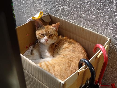 猫小屋 以前の配置