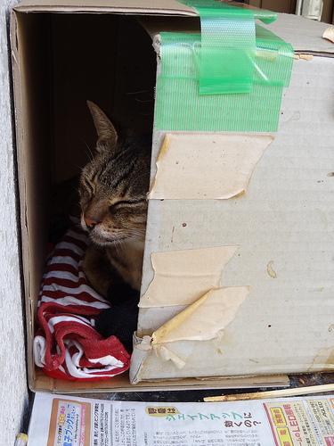 猫小屋 外猫miiが寝てます