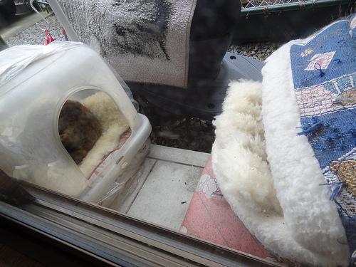 猫たちの寝床
