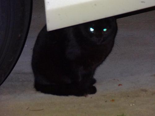 黒猫が来るようになった