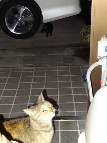 黒猫とアルのツーショット